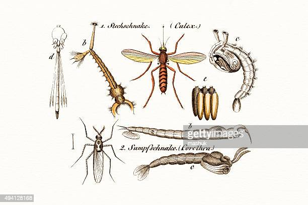 insects , 19 century science illustration