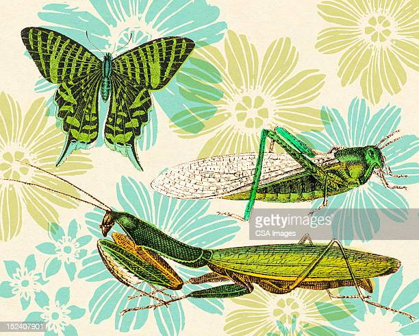 Insects and Flower Pattern