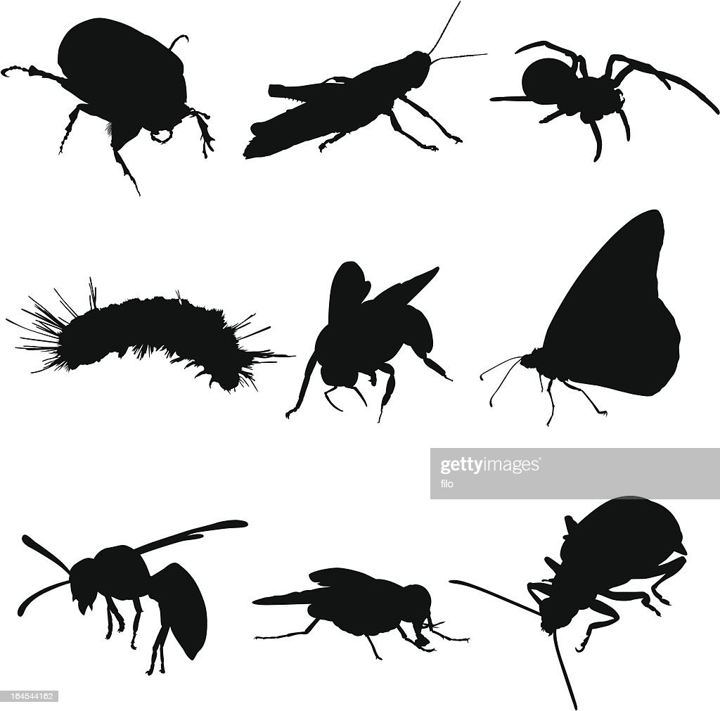 Insects Bugs and Spiders : stock illustration
