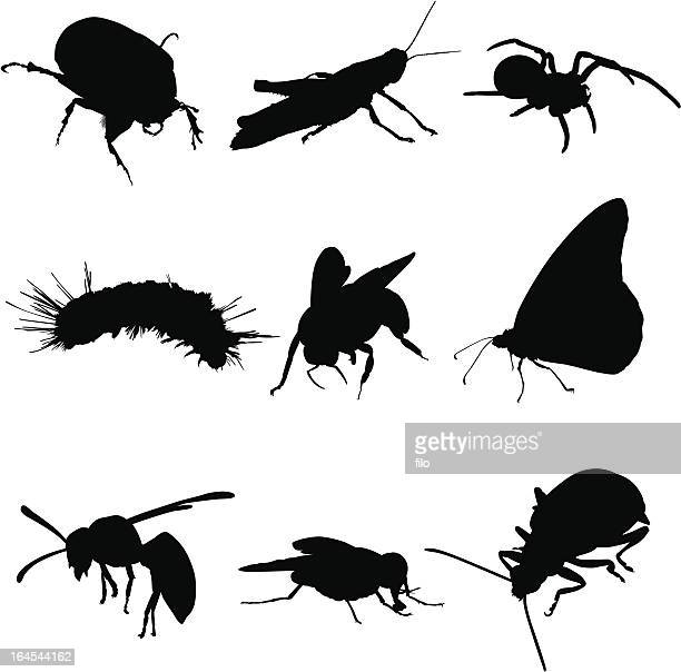 insects bugs and spiders - insect stock illustrations