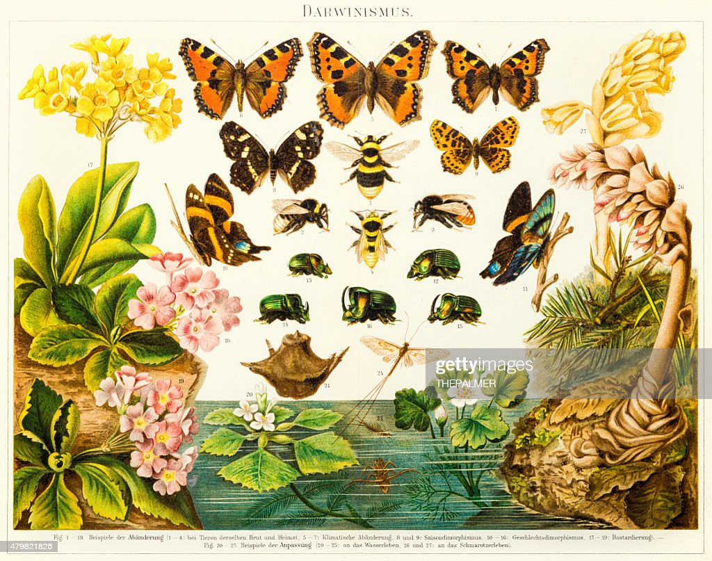 Insects butterflies  lithograph 1895 : stock illustration