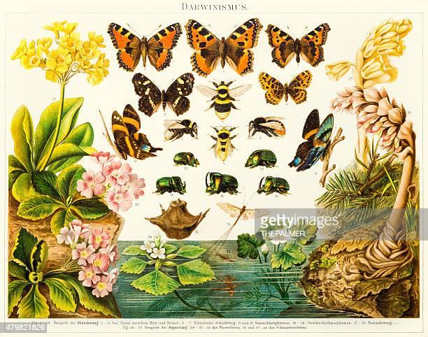 insekten schmetterlinge lithographie 1895 - darwin stock-grafiken, -clipart, -cartoons und -symbole
