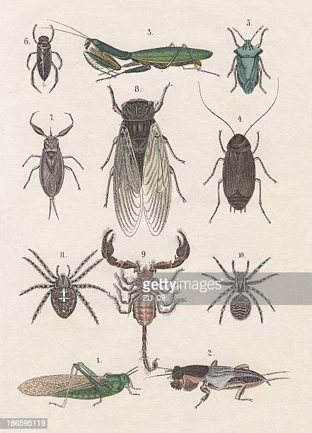 Insects, hand-colored lithograph, published in 1880