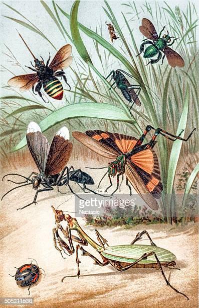 bildbanksillustrationer, clip art samt tecknat material och ikoner med insects - bumblebee
