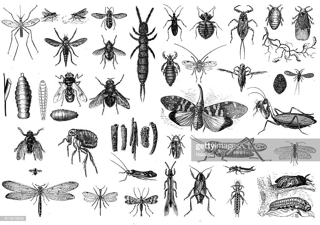 Insects : stock illustration