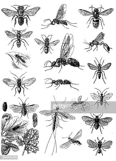 insects - wasp stock illustrations, clip art, cartoons, & icons