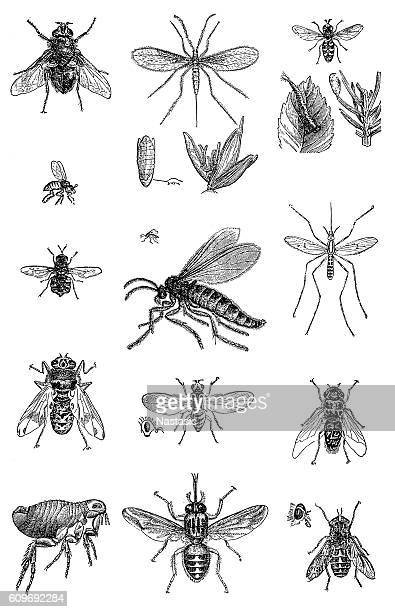 insects - worker bee stock illustrations