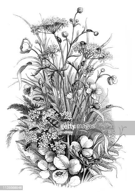 insects in the meadow - bees on flowers stock illustrations