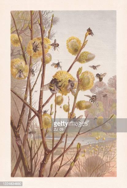 ilustraciones, imágenes clip art, dibujos animados e iconos de stock de insectos en primavera, cromolitógrafo, publicado en 1884 - biodiversidad