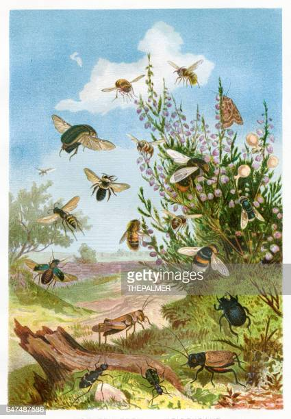 insects on heather chromolithograph 1884 - chromolithograph stock illustrations