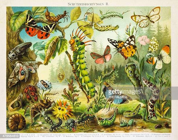 Insects protection devices lithograph 1895