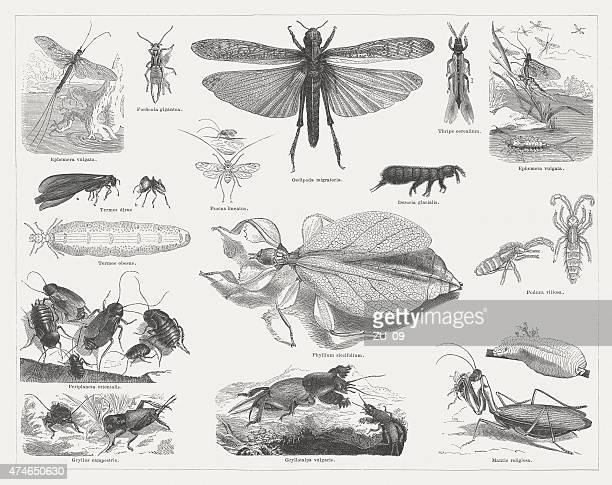 Insects, wood engravings, published in 1876