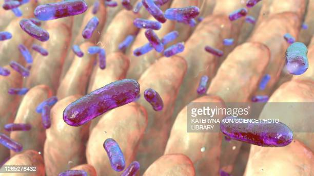 intestinal villi and bacteria, illustration - digestive system stock illustrations