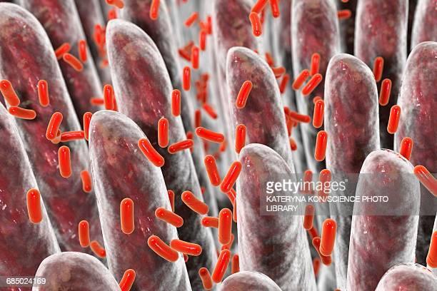 intestinal villi, bacteria, illustration - intestines stock illustrations, clip art, cartoons, & icons