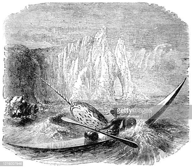 inuit man hunting a narwhal - 19th century - powerofforever stock illustrations