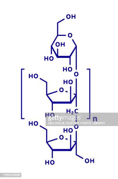 ilustrações, clipart, desenhos animados e ícones de inulin chemical structure, illustration - endive