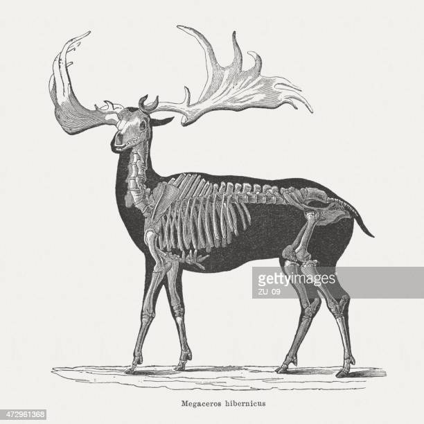 Irish elk (Megaloceros giganteus), wood engraving, published in 1875