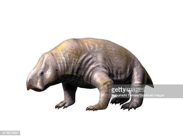 Ischigualastia is a dicynodont from the Late Triassic period.