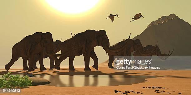 jabiru birds fly past a herd of columbian mammoths. - 乾燥気候点のイラスト素材/クリップアート素材/マンガ素材/アイコン素材