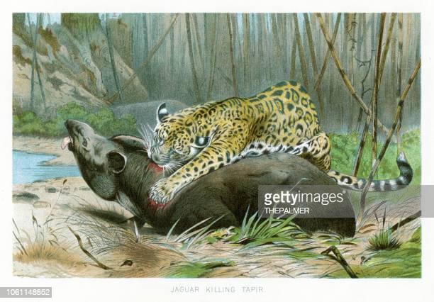 Jaguar killing tapir chromolithograph 1896