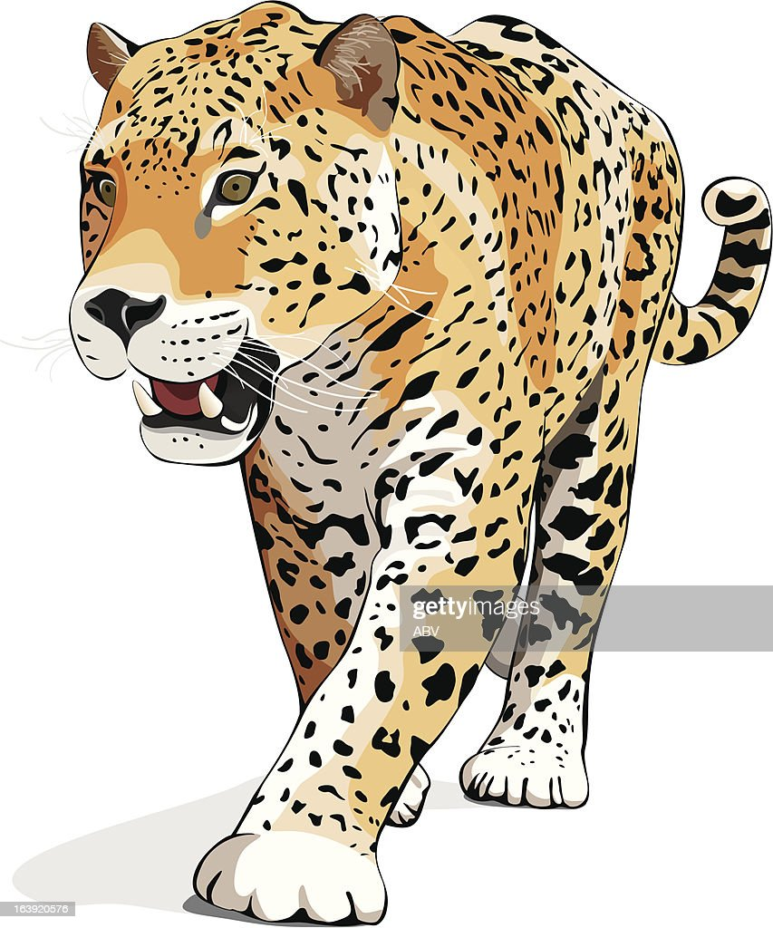Jaguar - vector, isolated on white, shadow