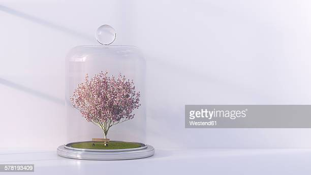 Japanese blooming cherry and a bench under bell jar, 3D Rendering