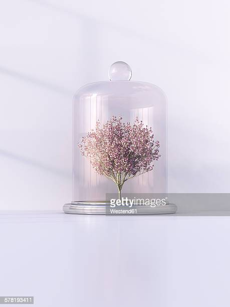 japanese blooming cherry under bell jar, 3d rendering - alertness stock illustrations