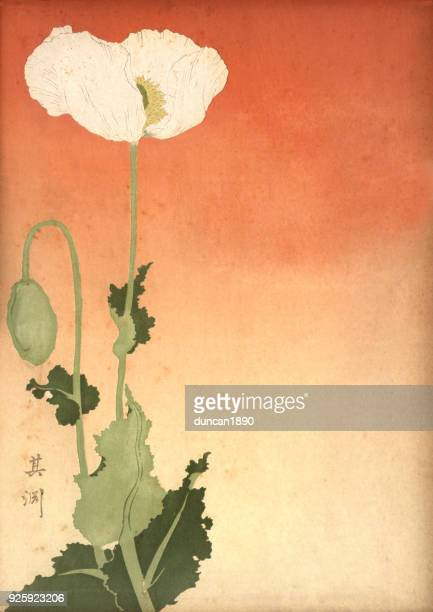 Japanese print of a white poppy, 19th Century