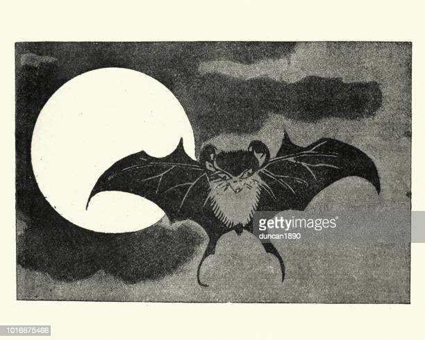 Japanesse Art, Bat flying across face of the moon