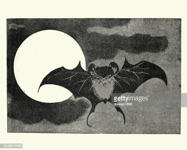 ilustraciones, imágenes clip art, dibujos animados e iconos de stock de japanesse arte, murciélago volando a través de la cara de la luna - vampiro