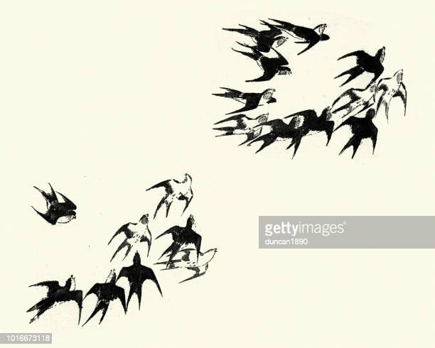illustrations, cliparts, dessins animés et icônes de japanesse art, troupeau d'hirondelles - hirondelle
