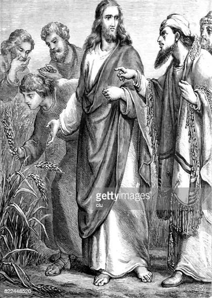 jesus christ and his disciples in the cornfields - zea stock illustrations, clip art, cartoons, & icons