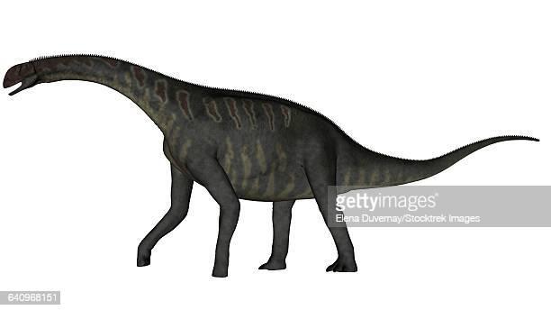 ilustraciones, imágenes clip art, dibujos animados e iconos de stock de jobaria dinosaur on white background. - paleozoología