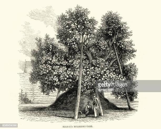 john milton mulberry tree - john milton stock illustrations, clip art, cartoons, & icons