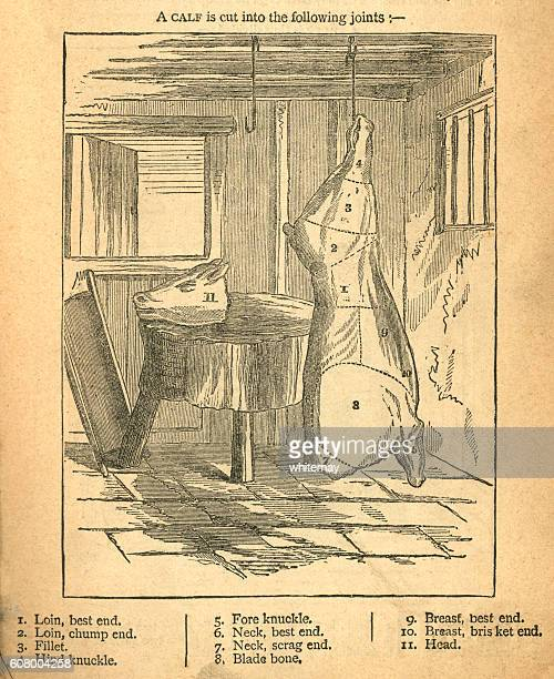 ilustraciones, imágenes clip art, dibujos animados e iconos de stock de jointing a calf - victorian diagram - matadero