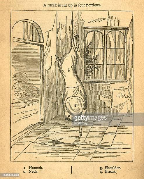 ilustraciones, imágenes clip art, dibujos animados e iconos de stock de jointing a deer - victorian diagram - matadero