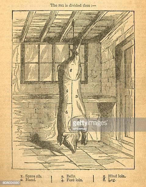 ilustrações, clipart, desenhos animados e ícones de jointing a pig - victorian diagram - baseado