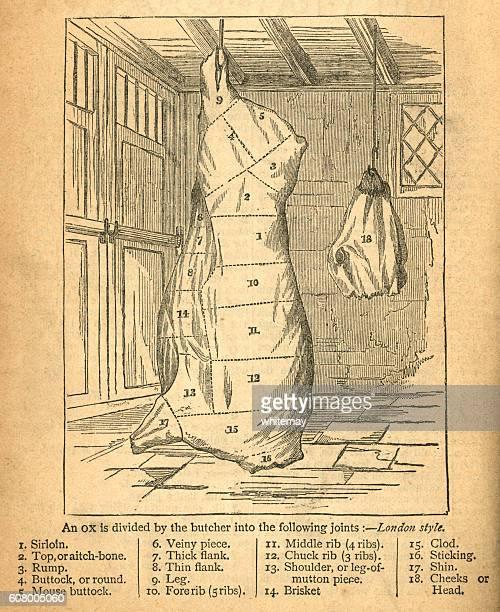 ilustraciones, imágenes clip art, dibujos animados e iconos de stock de jointing an ox - victorian diagram - matadero