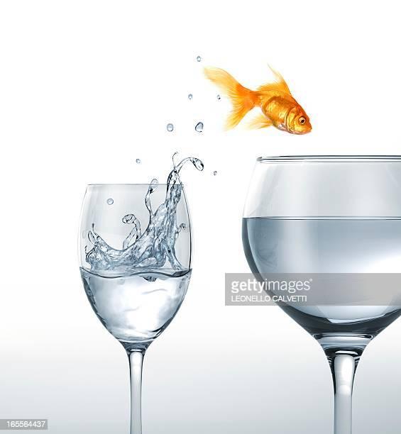 illustrations, cliparts, dessins animés et icônes de jumping goldfish, artwork - poisson rouge