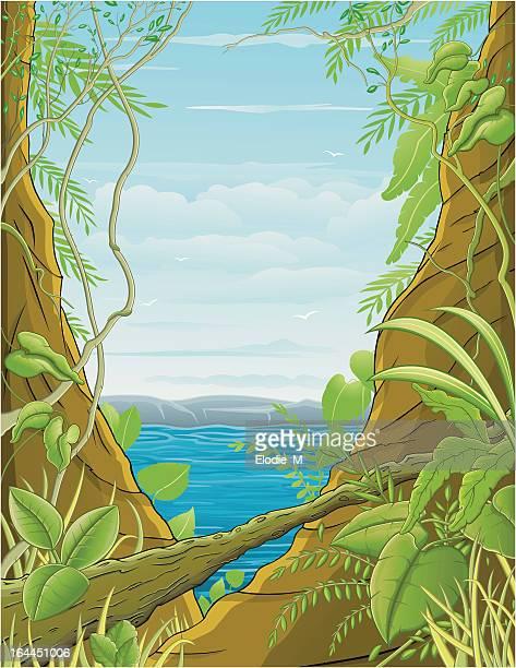 Jungle / Forêt tropical