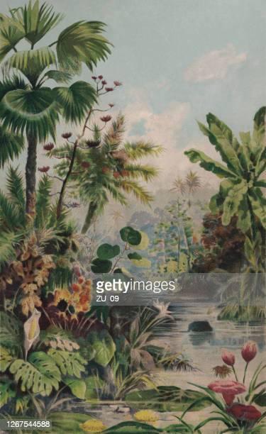 ジャングルの風景、クロモリトグラフ、1895年に出版 - リトグラフ点のイラスト素材/クリップアート素材/マンガ素材/アイコン素材