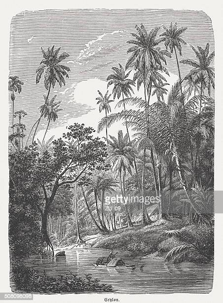Jungle landscape in Sri Lanka (Ceylon), wood engraving, published 1882