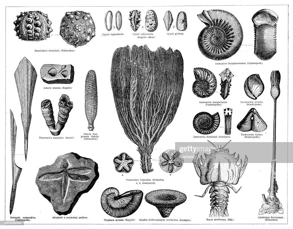 Jurassic fossils : stock illustration
