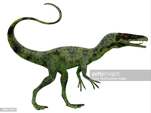 コエルロサウルス類のイラスト素...