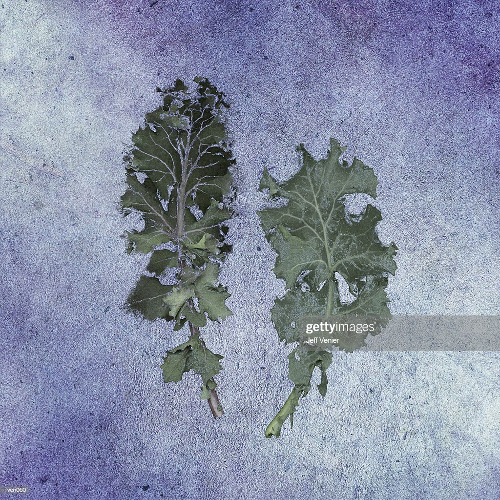 Kale Leaves : Stockillustraties