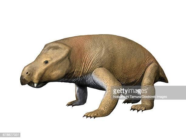 ilustraciones, imágenes clip art, dibujos animados e iconos de stock de kannemeyeria simocephalus is a large dicynodont from the middle triassic of south africa. - paleozoología