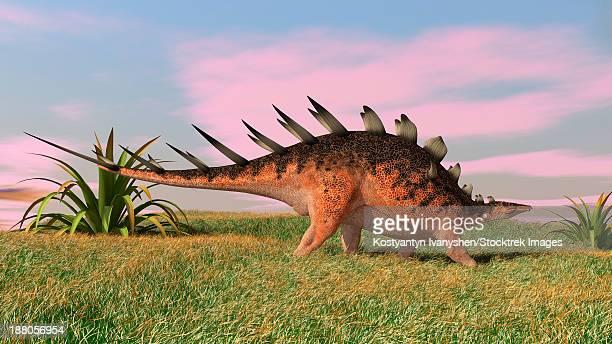 ilustraciones, imágenes clip art, dibujos animados e iconos de stock de kentrosaurus walking across prehistoric grasslands. - paleozoología
