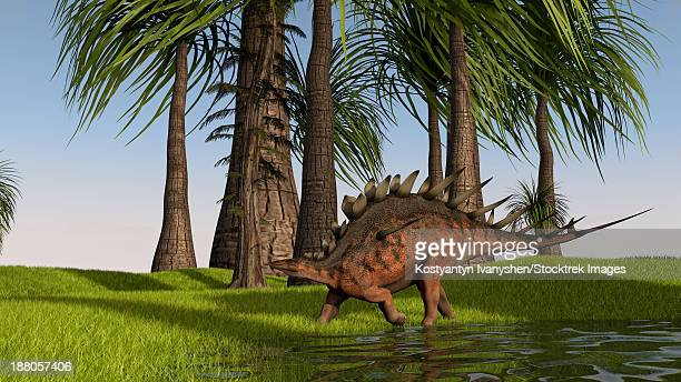 kentrosaurus walking along a nearby swamp. - thyreophora stock illustrations, clip art, cartoons, & icons