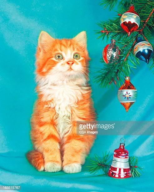kitten by a christmas tree - christmas kittens stock illustrations