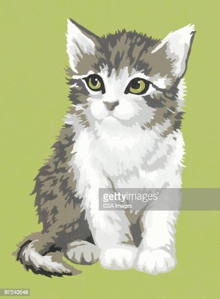 kitten - image stock illustrations